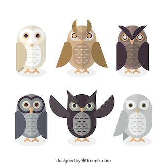 Flat owl set of six