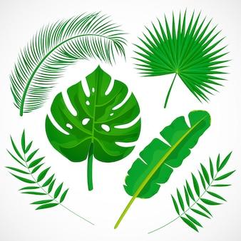 フラットのシュロの葉セット。熱帯植物のアイコンのコレクション。バナナ、モンステラ、パルメット、ココナッツの葉が白い背景で隔離。植物イラスト