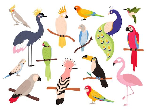 평평한 앵무새와 열대 정글 새들이 날고 앉아 있습니다. 잉꼬, 잉꼬, 아라, 콜롬비아 이국적인 앵무새. 큰부리새와 에뮤 새 벡터 세트입니다. 낙원에서 나무에 앉아 앵무새의 그림