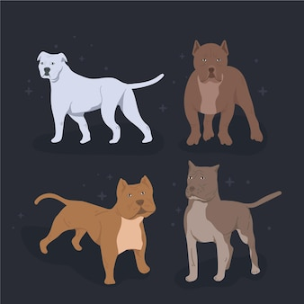 플랫 핏불 강아지 컬렉션