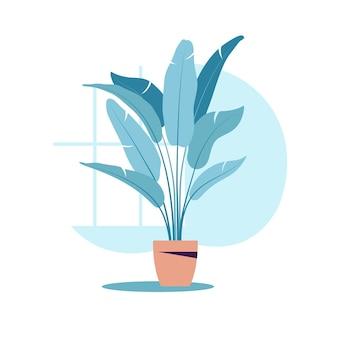 냄비에 평평한 식물. 고립 된 화분에 심는 식물