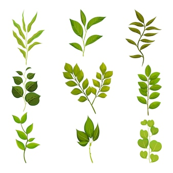 Flat set of branches with green leaves. twigs with fresh foliage. nature and flora theme