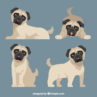 Flat set of cute pugs