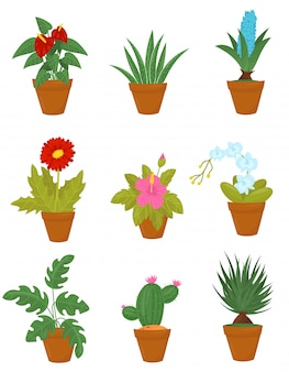 Flat set of indoor plants in brown ceramic pots. houseplants with green leaves and blooming flowers