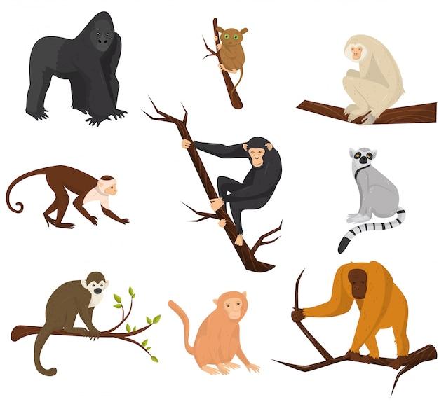 Плоский набор из 9 видов обезьян. дикие животные.