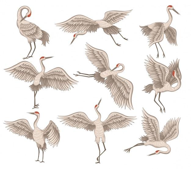 다른 작업에 아름 다운 붉은 즉 위 크레인의 평면 세트. 길고 얇은 부리, 다리 및 목을 가진 야생 조류