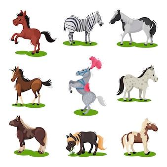 Плоский набор разных лошадей. копытное млекопитающее животное. тема дикой природы и фауны. элементы для детской книги
