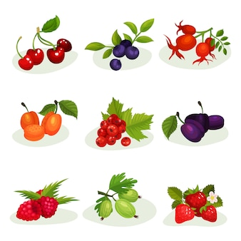さまざまな種類のおいしい果実のフラットセット。甘くて健康的な食べ物。ジュースまたはヨーグルトの包装の要素