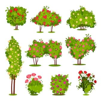 バラの茂みのフラットセット。庭の植物を開花します。美しい花と緑の低木。景観要素