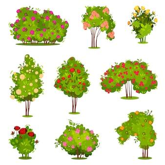 장미 덩굴의 평면 세트입니다. 아름다운 꽃과 녹색 관목. 정원 식물. 자연 경관 요소