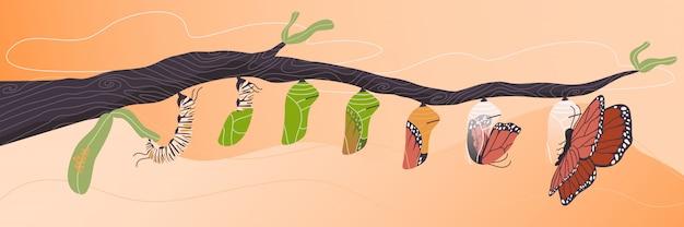 나비 수명주기의 평면 스타일 벡터 만화 일러스트.