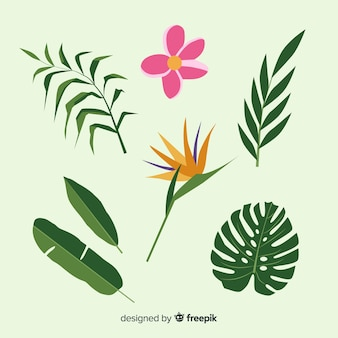 Flat tropical flowers and leaves pack