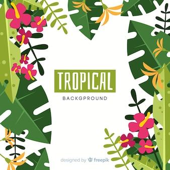 Fondo piatto piante tropicali