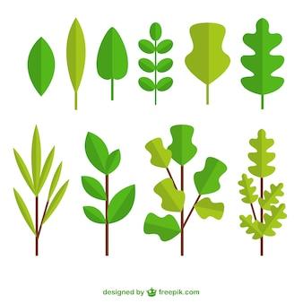 잎의 편평한 다양성
