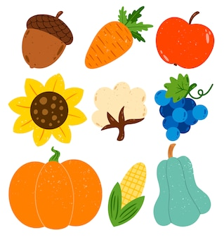 Flat vector autumn harvest illustration set. pumpkin, zucchini, cotton, acorn, carrot, apple, sunflower, grapes, corn isolated on white