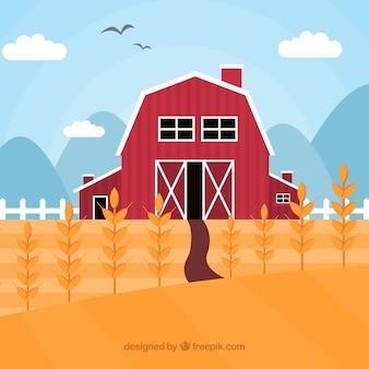 フィールドと平らな小麦の背景