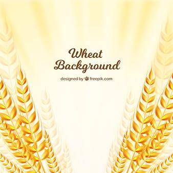 Фон плоской пшеницы
