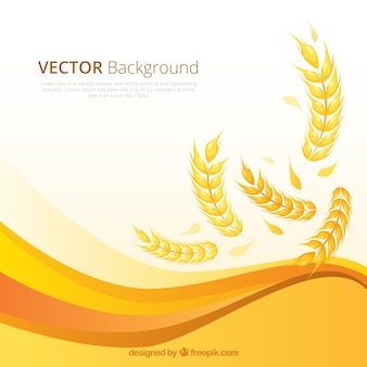 Flat wheat background