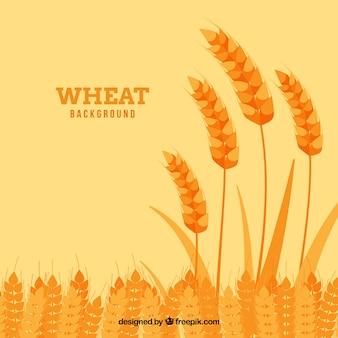 Flat wheat background