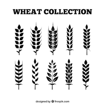 Flat wheat collection
