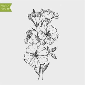 Цветы льна, изолированные на серый