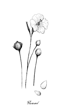 Flax or linum usitatissimum plant with seed