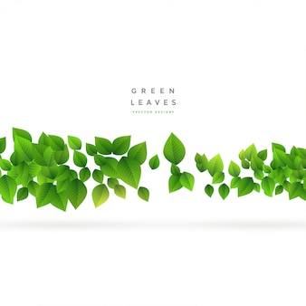 Floating green leaves on white