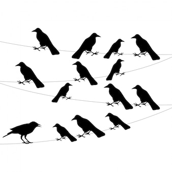 A flock of crows on the wire