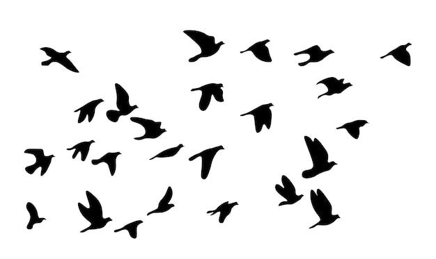 飛んでいる鳥の群れ