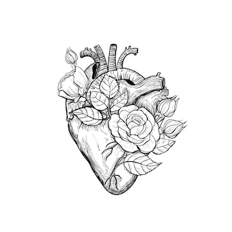Floral anatomical human heart heart vintage tattoo print with heart in blooming roses