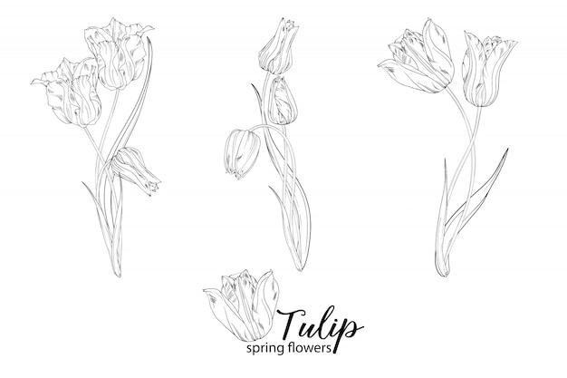 Иллюстрация цветочных композиций