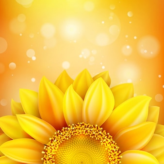 Floral autumn background with sunflower.