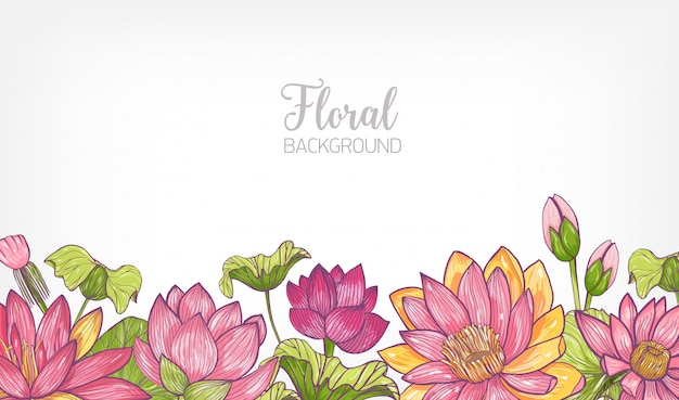 Floral background decorated with bright colored blooming lotus flowers and leaves at bottom edge.