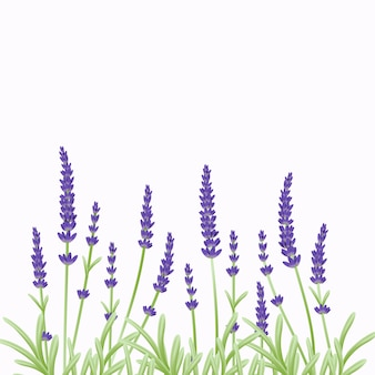 Floral  background template design with lavender flowers.