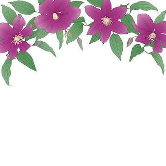Floral background with clematis flowers.