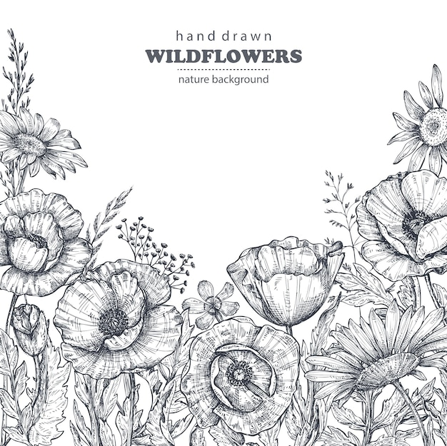 Floral background with hand drawn poppy and other flowers and plants. monochrome vector illustration in sketch style.