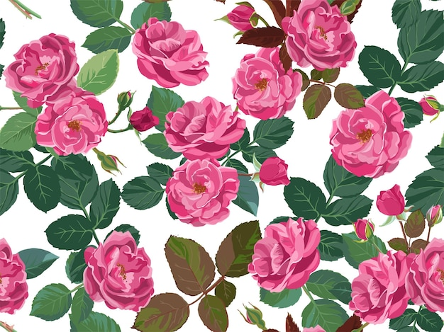 Floral background with roses or pink peonies isolated on white. flora in blossom, petals and foliage with buds. gardening and florist shops assortment. seamless pattern, vector in flat style