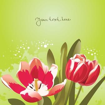 튤립과 꽃 배경