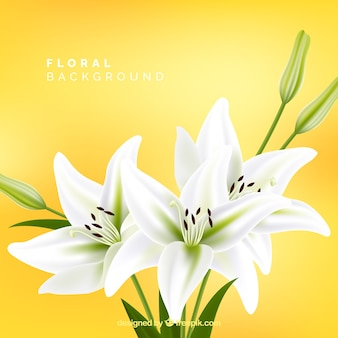 Floral background with white lilies