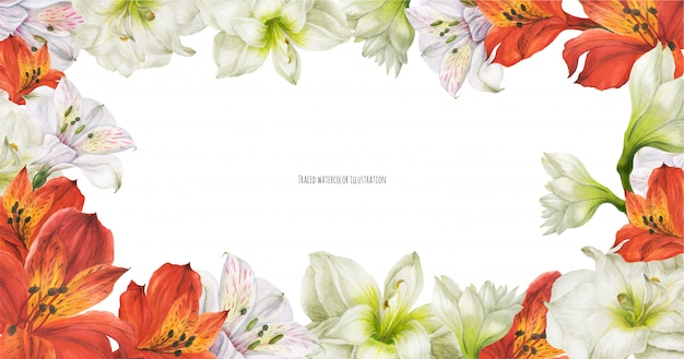Floral banner with red and white lily flowers