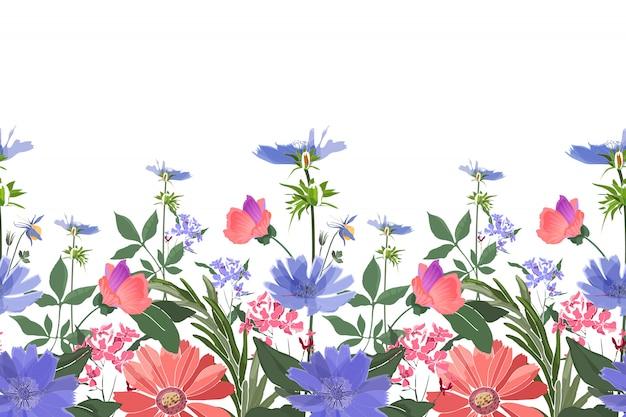 花のボーダー。夏の花、緑の葉。チコリ、ゼニアオイ、テンニンギク、マリーゴールド、オックスアイデイジー。分離されたピンク、ブルーの花