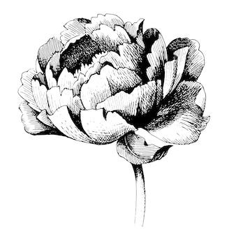 花の植物の花。孤立したイラスト