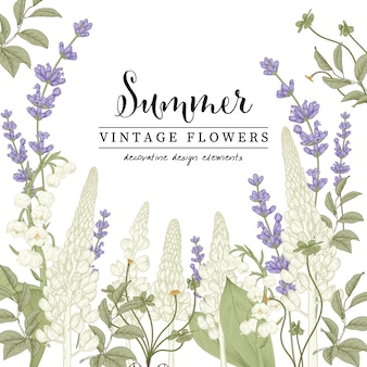 Floral botanical illustrations, lavender and lupine flower drawings.