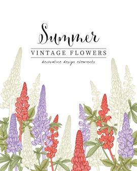 Floral botanical illustrations, lupine flower drawings.