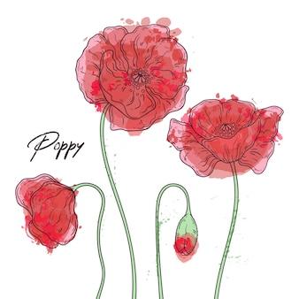 Цветочные ботаники иллюстрации. эскизы цветов мака.