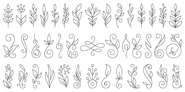 Floral branch ornament hand drawn flower doodle line set, plant brush collection.