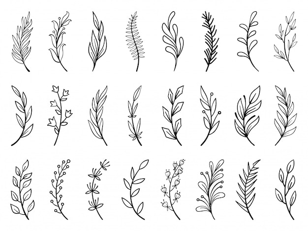 Floral branch, wreath hand drawn flower doodle line set, plant brush collection.