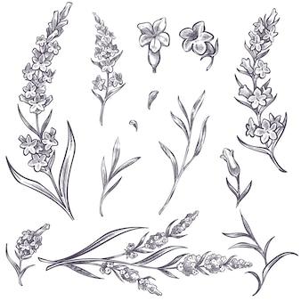 꽃과 부드러운 꽃잎이 있는 꽃 가지