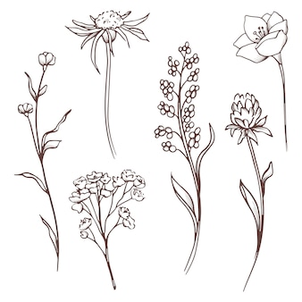 Floral collection. hand drawn set flowers and leaves. blooming composition.
