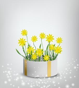 선물 상자에 꽃 컬렉션 노란색 카모마일입니다.